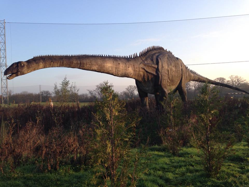A day in the life of a Diplodocus